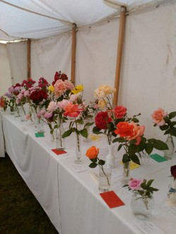 Roses in the Flower & Produce Show