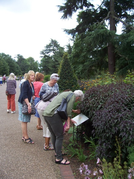 Identifying the plants on the Broad Walk